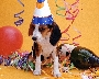 party_dog